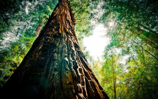 RedwoodExtremebycolindub.com.jpg