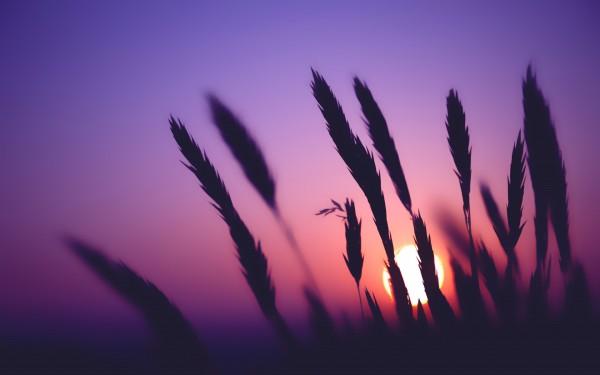 Sunsetbyunknown.jpg