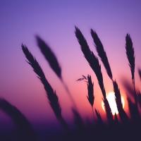 Sunsetbyunknown